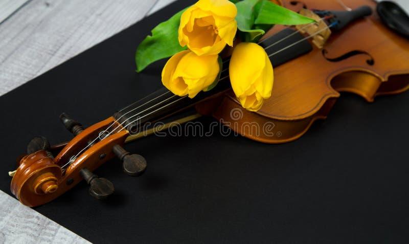 郁金香和小提琴 库存照片