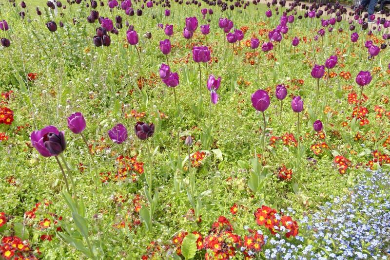郁金香和野花,三位一体方形的庭院,伦敦,英国 库存图片