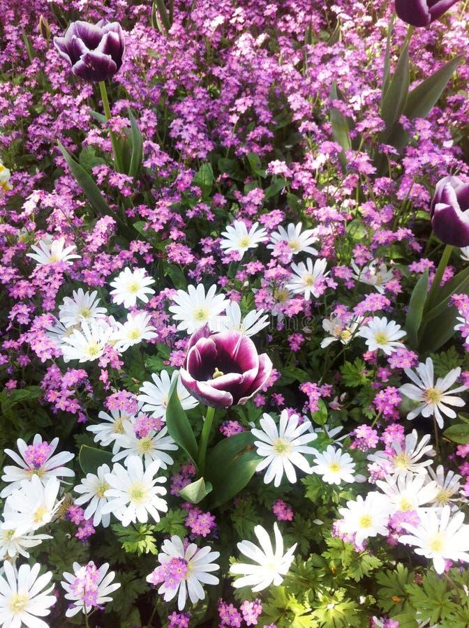郁金香和lilly花 在领域的美丽的花 图库摄影