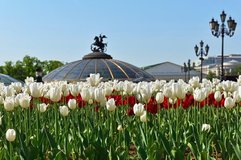 郁金香在亚历山大公园(在花的焦点) 图库摄影