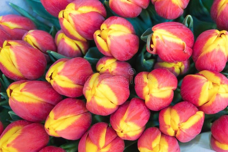 郁金香在市场上,在红色和黄色颜色 库存照片