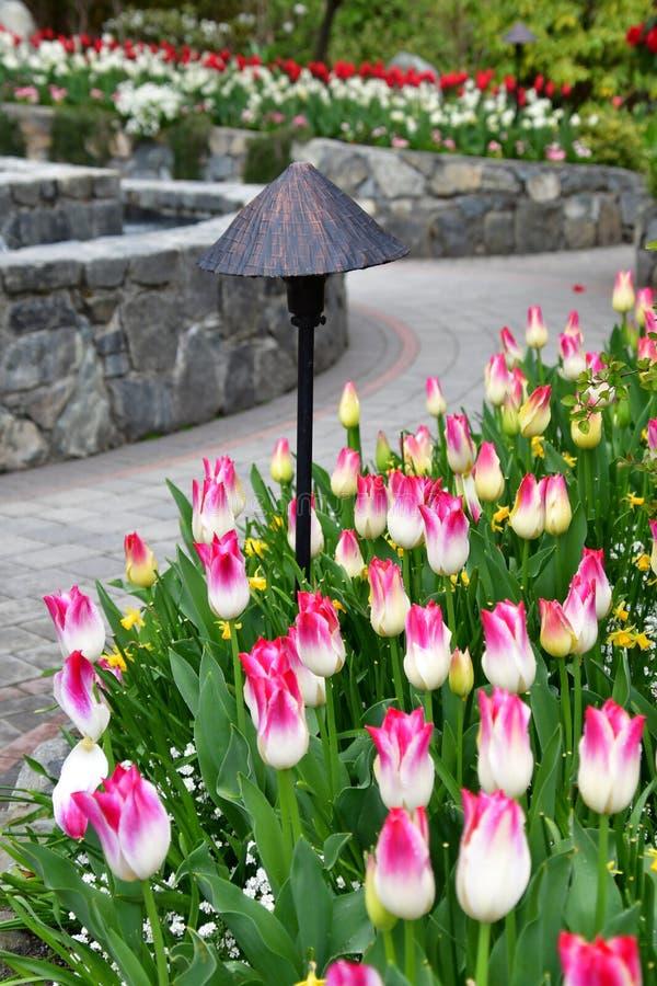 郁金香在布查德花园 BC维多利亚 免版税库存图片