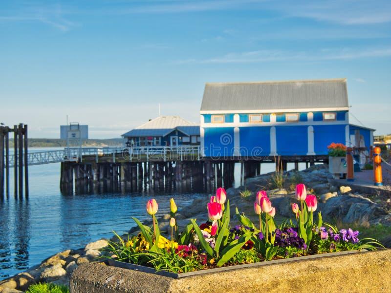 郁金香在悉尼,温哥华岛,不列颠哥伦比亚省装饰海边步行 免版税图库摄影