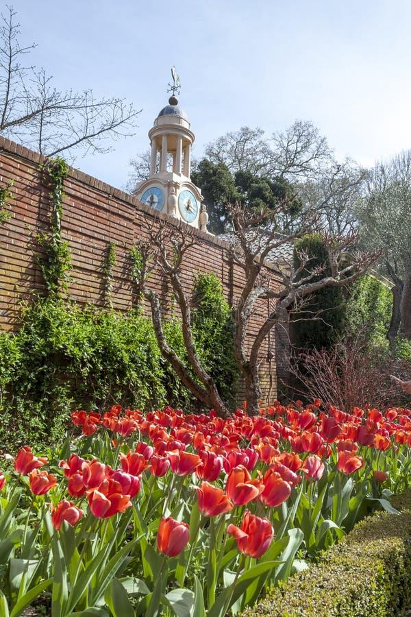 Download 郁金香塔 库存图片. 图片 包括有 新鲜, 装饰, beauvoir, 植物群, 从事园艺, 花圃, 庭院 - 72369357