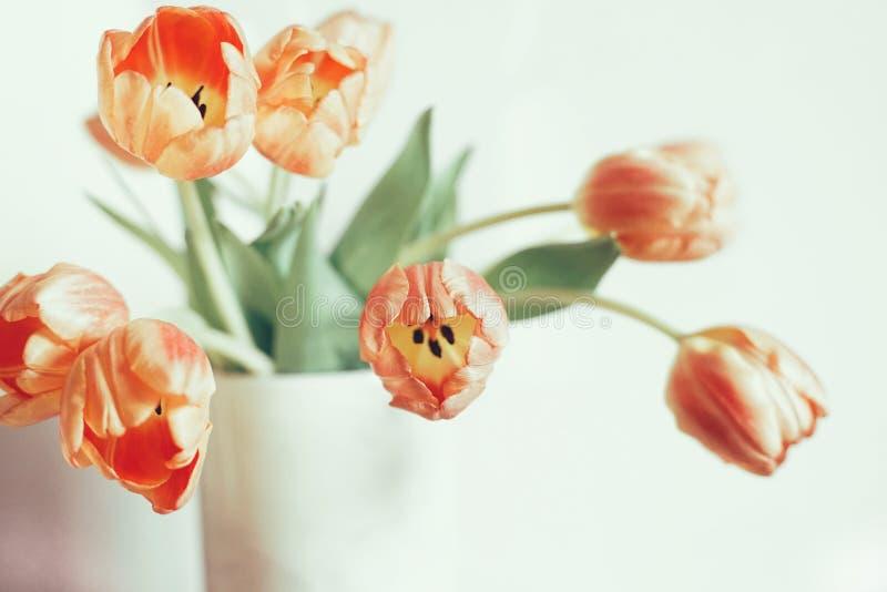 郁金香开花花束特写镜头光被构造的白色颜色背景 库存照片