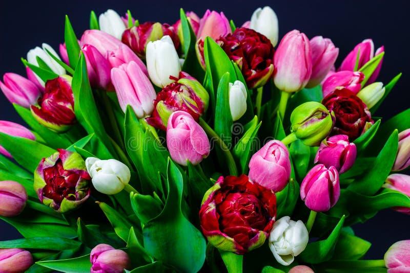 郁金香明亮的花束在黑暗的背景的有花卉背景 免版税库存照片