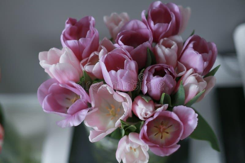 郁金香桃红色和红色花在家庭装饰 图库摄影