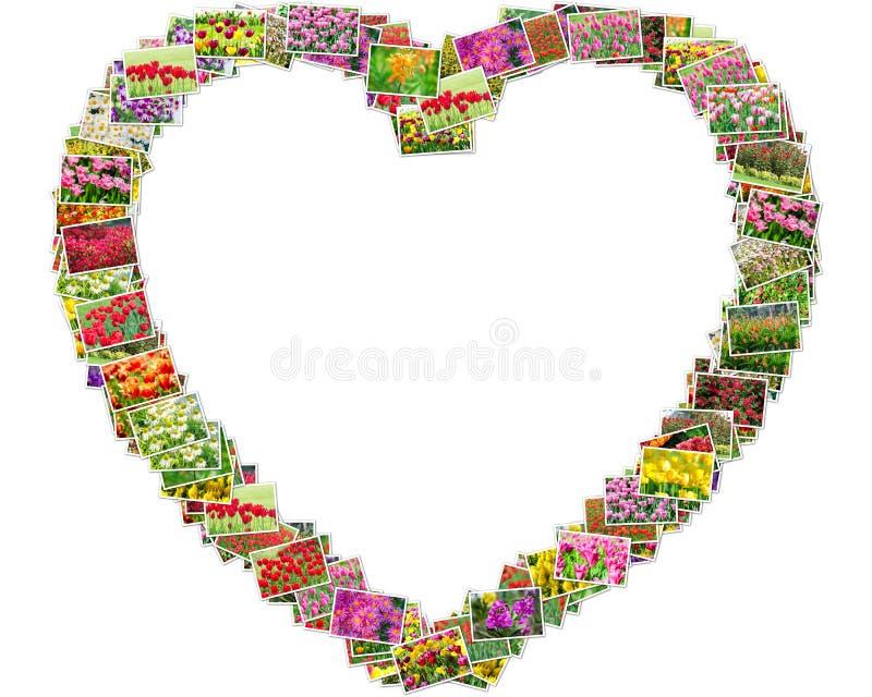 郁金香照片在心脏形状安排了 免版税图库摄影