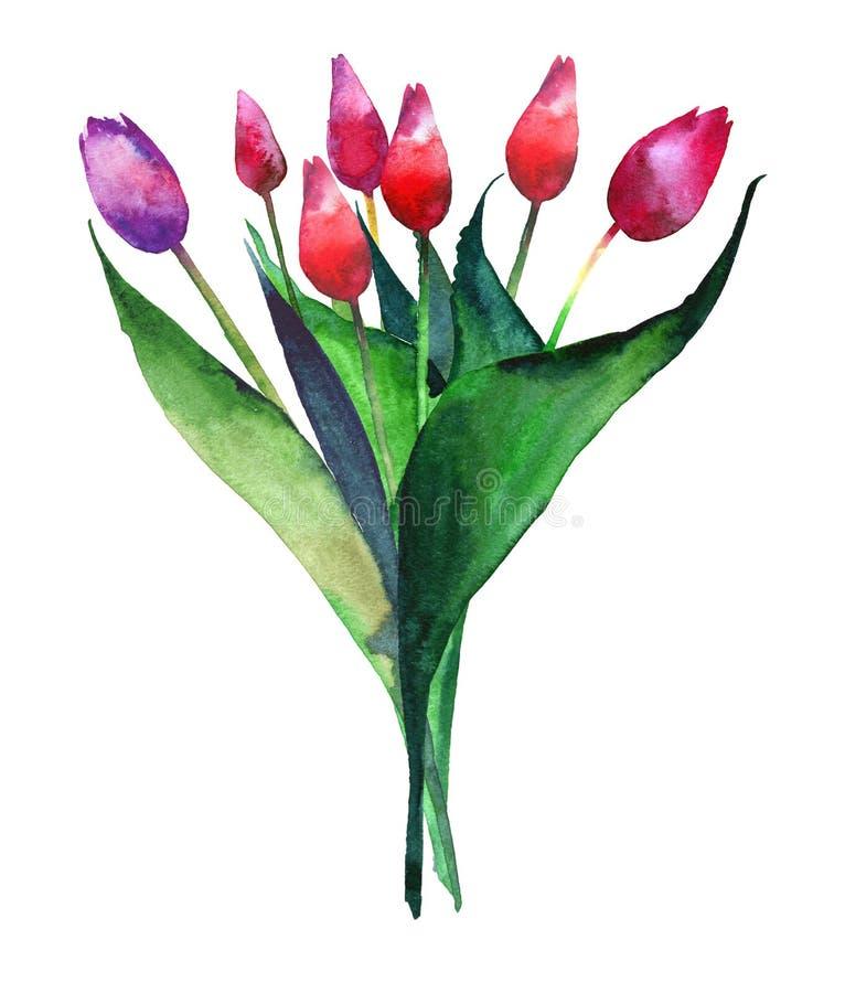 郁金香红色桃红色和紫色美妙的明亮的被提炼的花束开花水彩手剪影 向量例证
