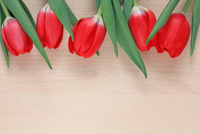 郁金香红色花背景在木桌上的 免版税图库摄影