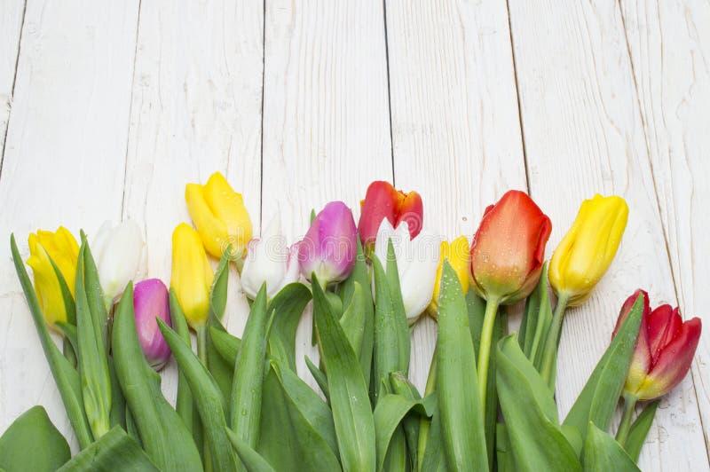 郁金香花束在白色背景,妇女的天,情人节的 图库摄影