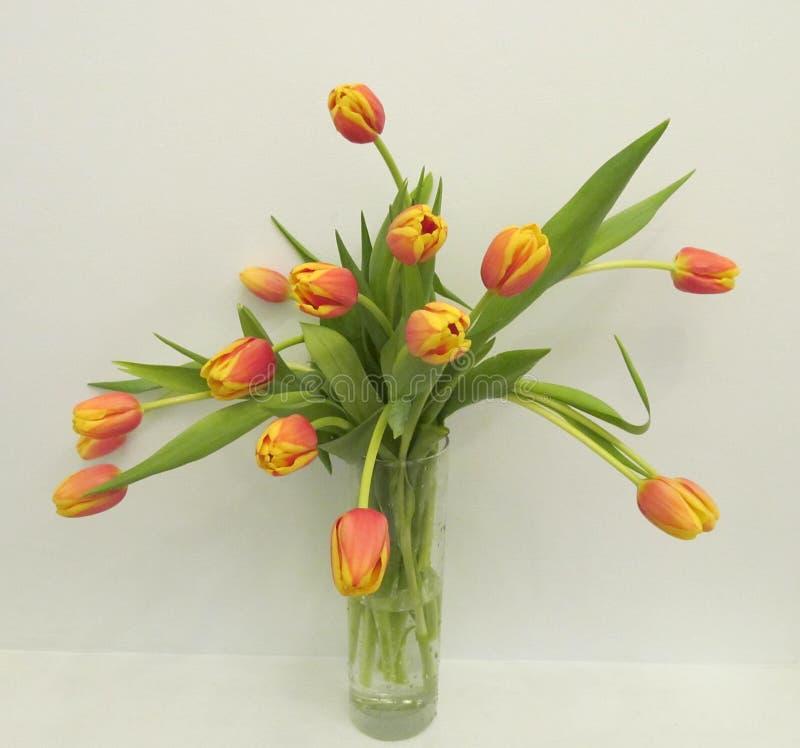 郁金香花束在被隔绝的花瓶的 图库摄影