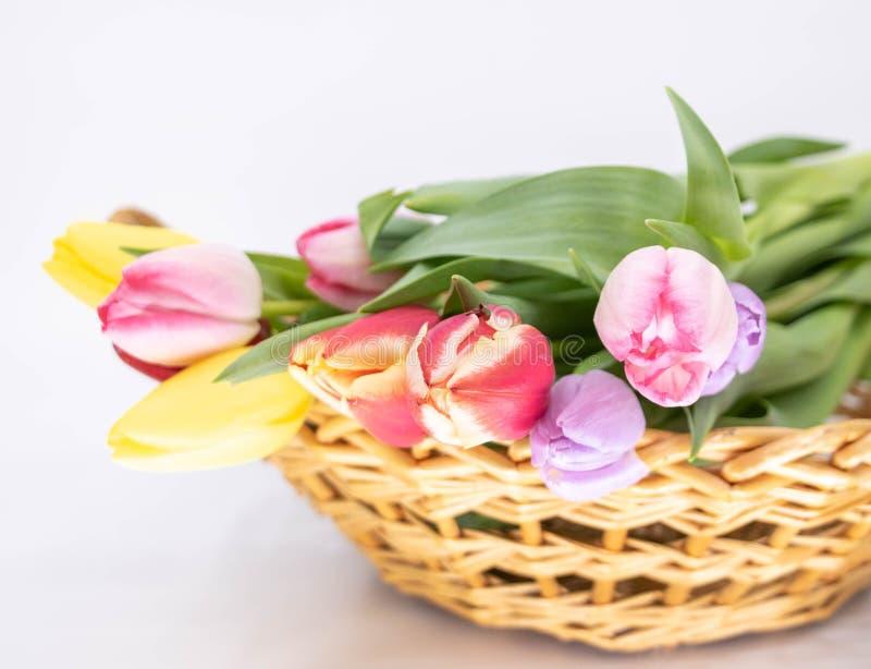 郁金香花束春天到来的  库存照片