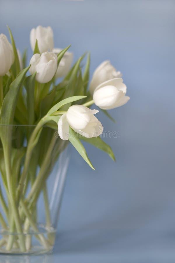 郁金香花瓶白色 库存照片