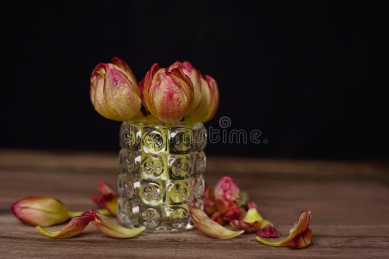 郁金香花瓶黑色背景木桌特写镜头 免版税图库摄影