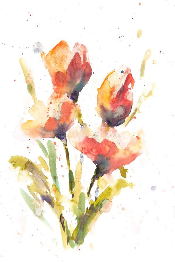 郁金香花,水彩绘画 皇族释放例证