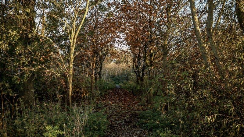 郊区的黑森林 图库摄影