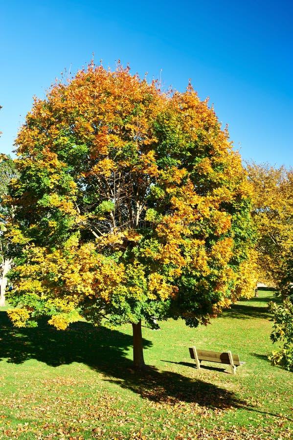 郊区邻里在秋天 免版税库存图片