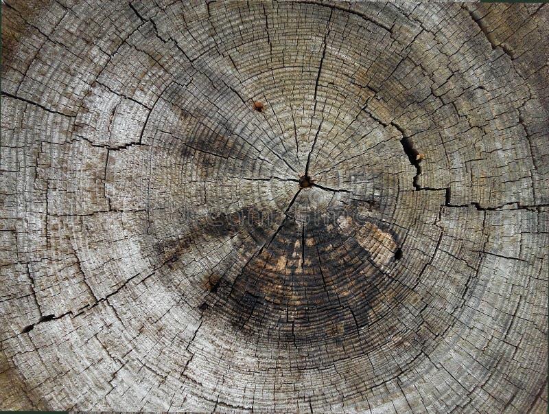 部分切开了成橡木树干  免版税库存照片