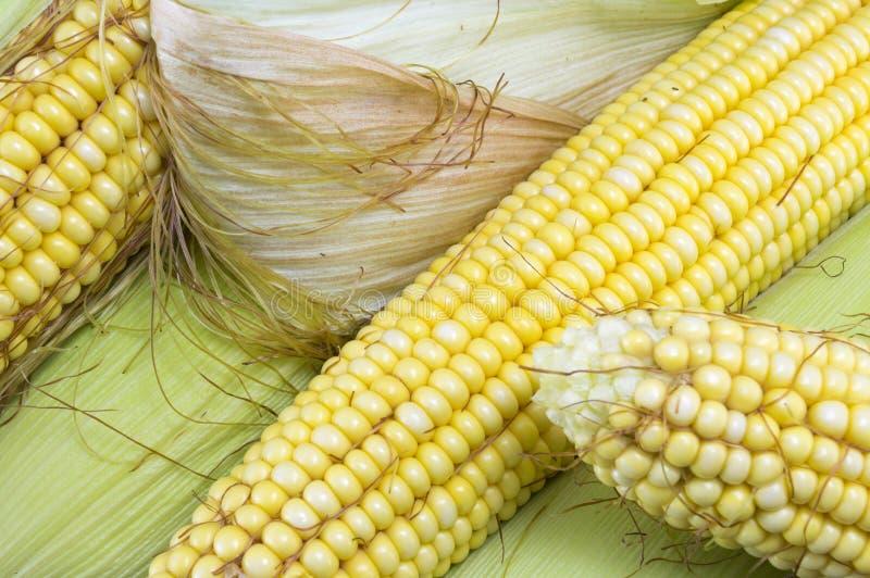 部分地显露的新鲜的黄色玉米 免版税库存图片