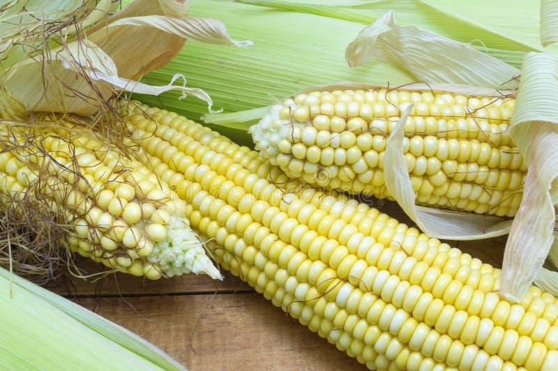 部分地显露的新鲜的黄色玉米 库存照片