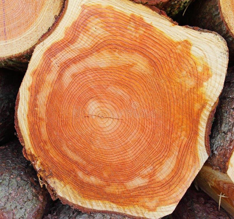 部分被锯的木材 图库摄影