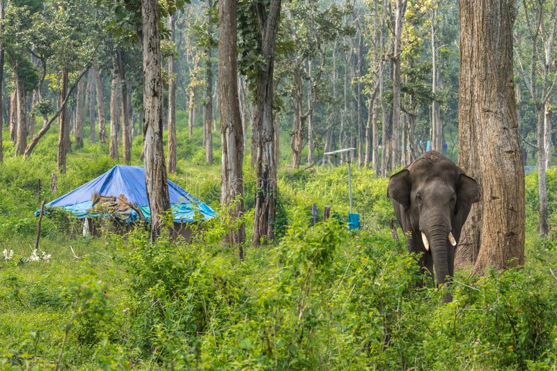 部族住宅和大象在Dubare大象野营, Coorg Indi 免版税库存照片