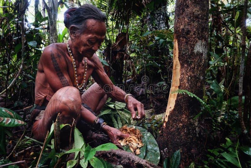 部族长辈收集材料果子和植物jungl的Toikot 免版税库存图片