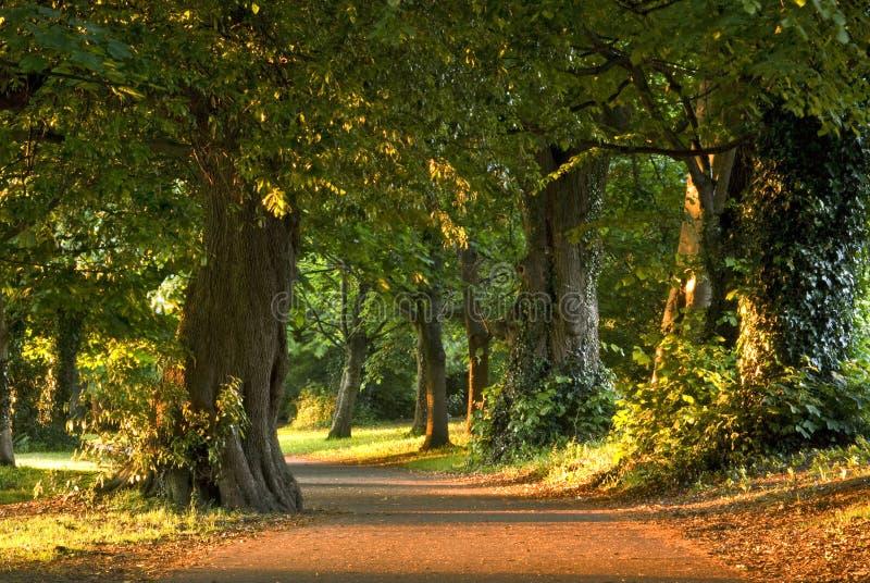 都伯林marley公园 库存照片