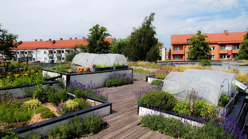 都市从事园艺的屋顶在瑞典 免版税图库摄影