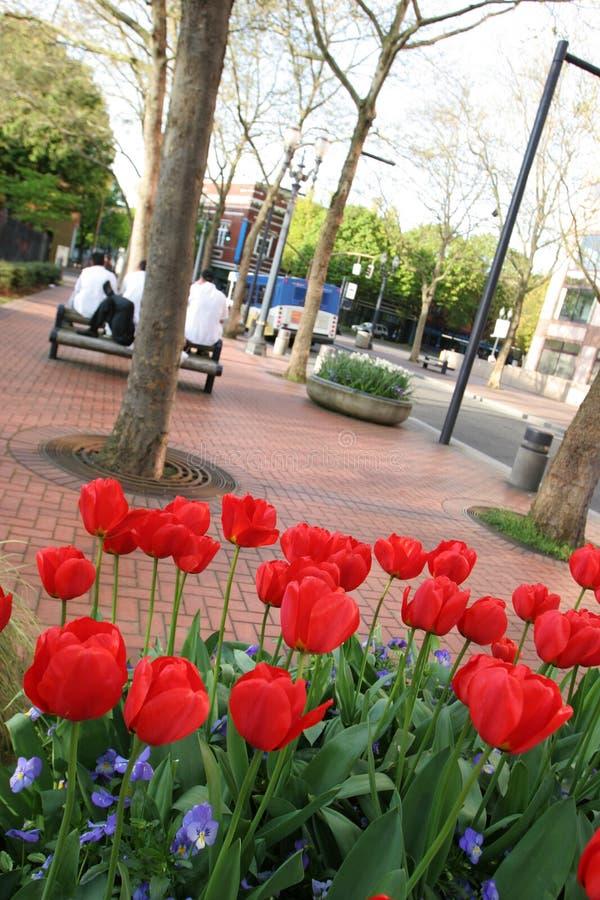 都市公园的郁金香 免版税库存照片