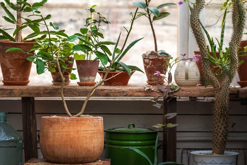 都市密林 与植物,花的冬景花园 庭院在房子里,移植的植物 库存照片