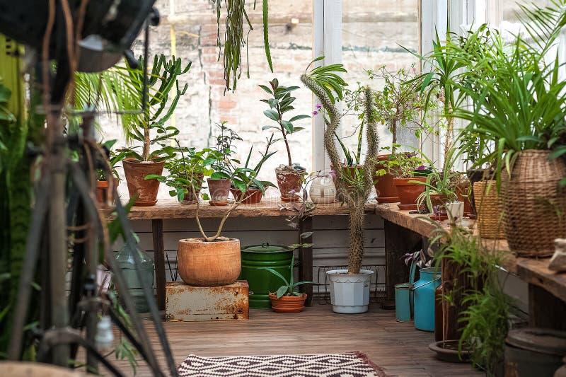 都市密林 与植物,花的冬景花园 庭院在房子里,移植的植物 免版税库存图片