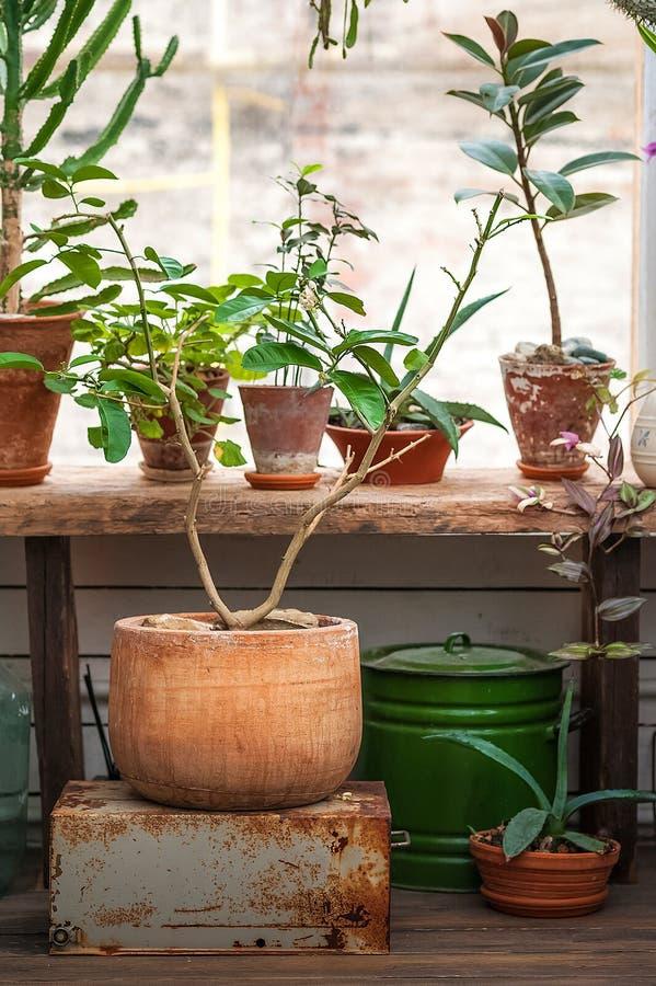 都市密林 与植物,花的冬景花园 庭院在房子里,移植的植物 免版税图库摄影