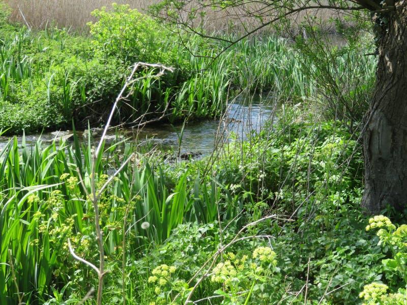 都市小河在南都柏林郡郊区 库存图片