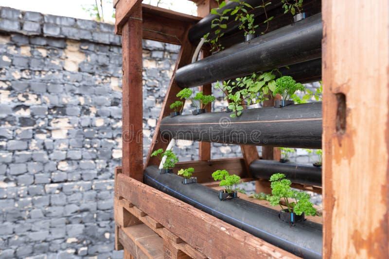 都市庭院,管子做了作为罐 蔬菜栽培在城市 免版税库存图片