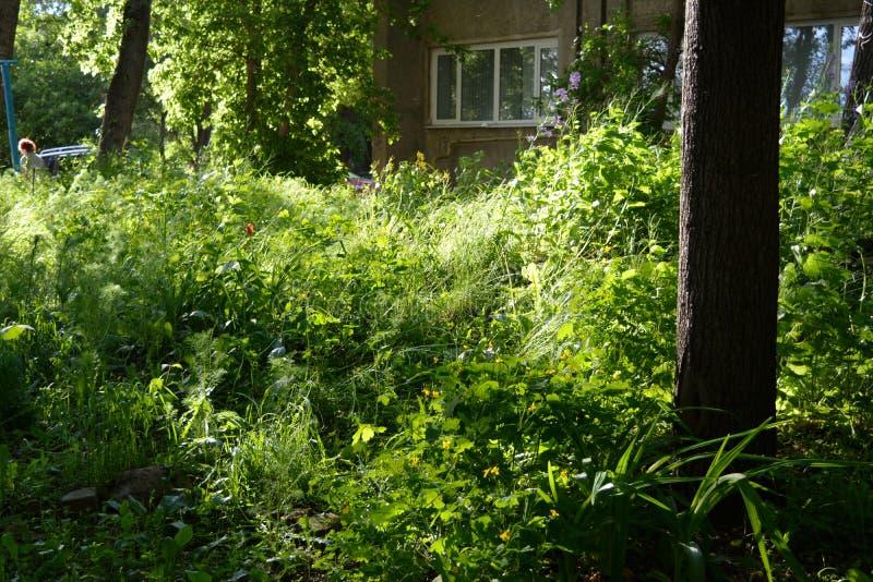 都市横向的夏天 都市庭院的绿叶有质朴的植物的例如游击队员从事园艺 图库摄影