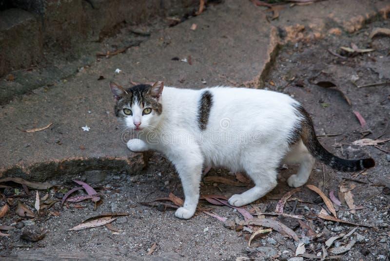 都市的猫 免版税库存图片