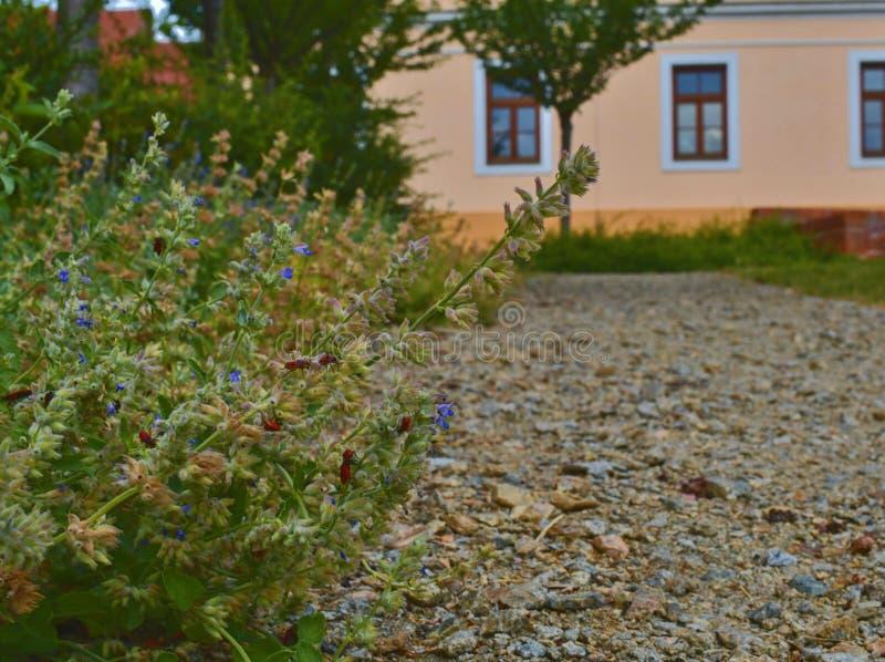 都市石渣道路 颜色箭深度域浅软件 花和大厦在背景 选择聚焦 库存照片