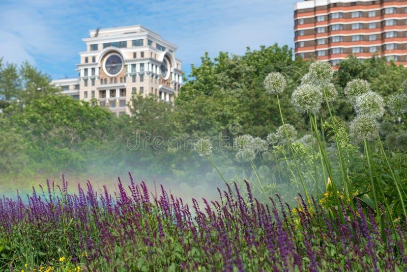 都市花圃和彩虹的水滴灌溉 免版税库存图片