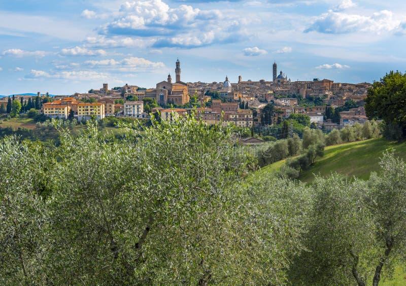 都市风景,锡耶纳,托斯卡纳,意大利 库存照片