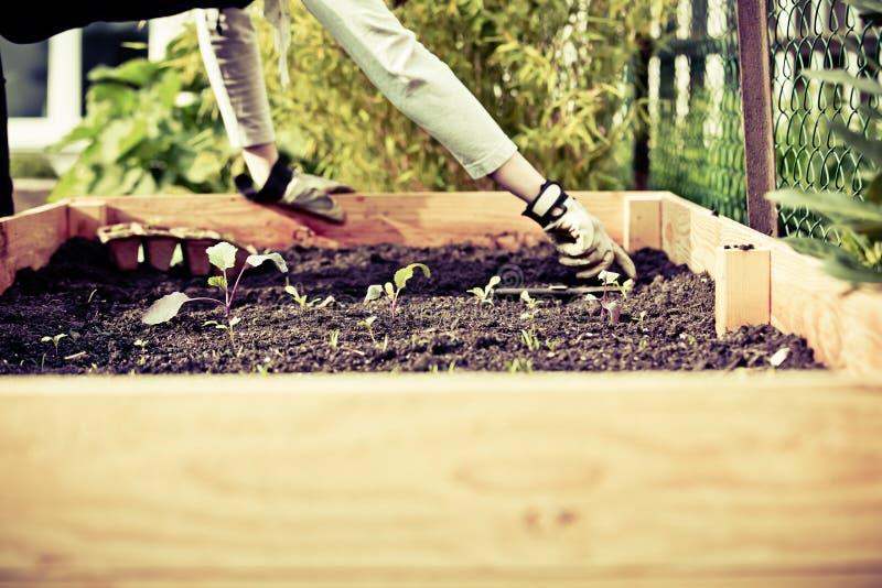 都市从事园艺的生物耕种 免版税库存照片