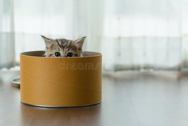 配件箱逗人喜爱的小猫 免版税库存照片