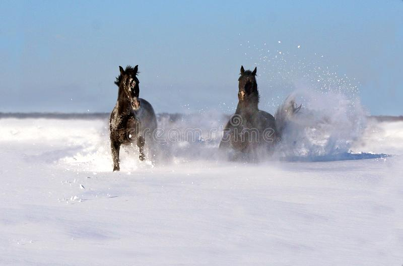 配对马在一冬天好日子 库存照片