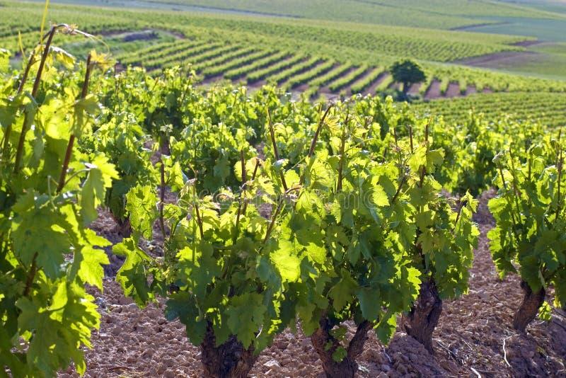 酒山在农村拉里奥哈,西班牙 免版税库存照片