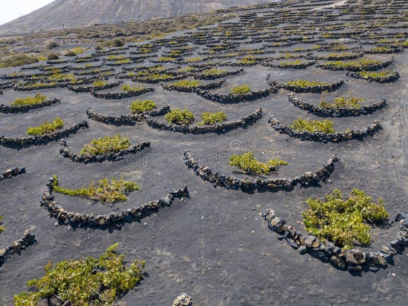 酒耕种的鸟瞰图在兰萨罗特岛海岛的火山的土壤的  加那利群岛西班牙 葡萄酒酿造 免版税库存照片