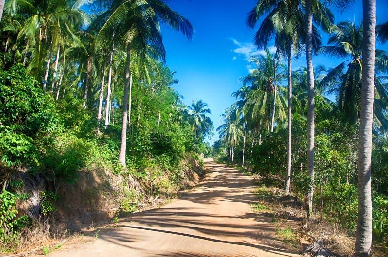 酸值苏梅岛热带森林 免版税库存照片