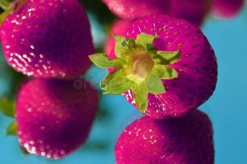 酸草莓流行艺术样式 库存图片