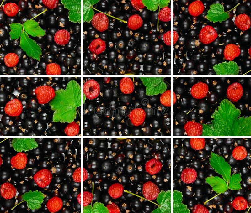 黑醋栗,莓莓果的背景和 免版税库存图片