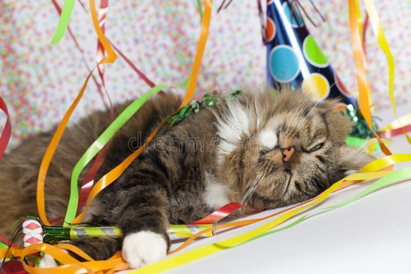 醒在党以后的猫 免版税图库摄影
